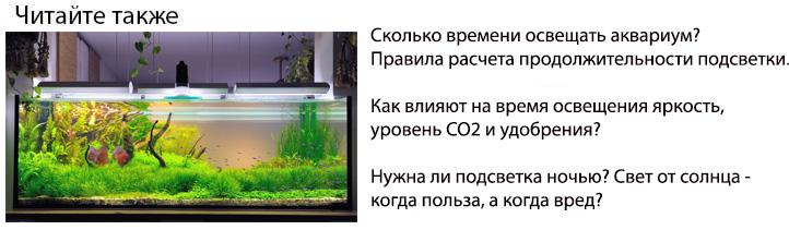сколько времени нужно освещать аквариум нормативы