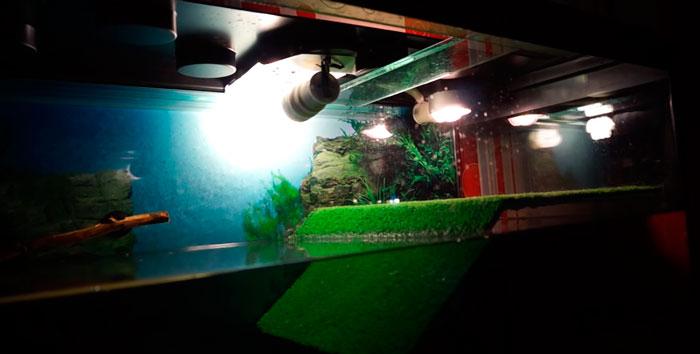 высота установуки уф лампочек в аквариуме с черепахами