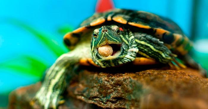 подкормка аналог витамина Д3 для черепах