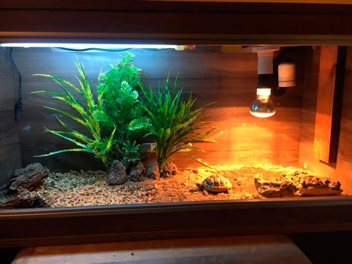 высота установки греющей лампы в аквариуме с черепахами
