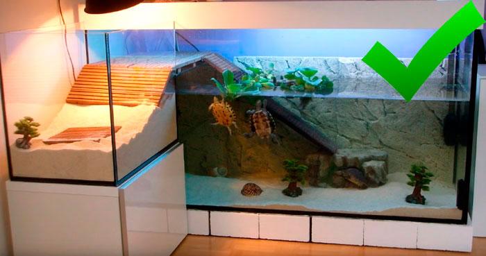 зачем черепахи большой аквариум
