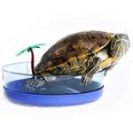 Выбор и установка ультрафиолетовой лампы для красноухой и сухопутной черепахи.