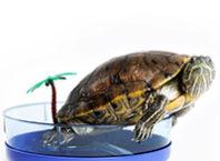 выбор уф ламп для черепах
