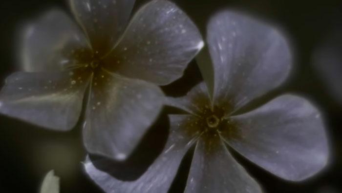 как пчелы видят цветы в ультрафиолете