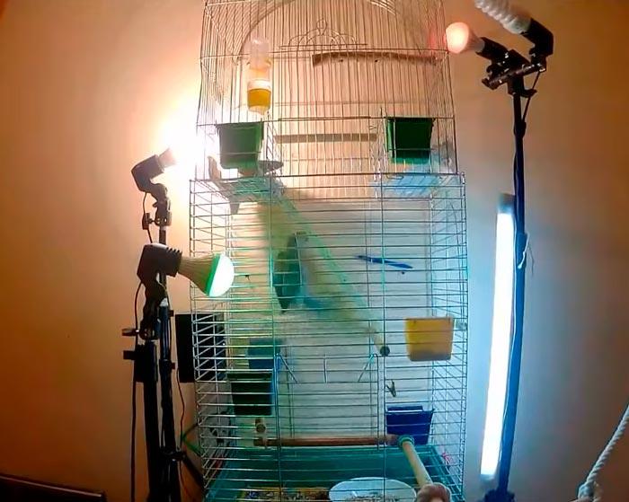 много освещения для попугая ультрафиолет польза и вред