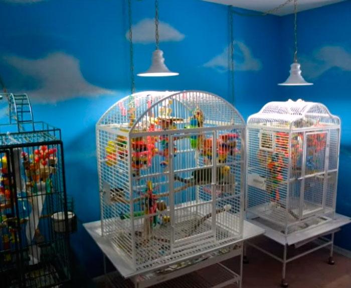 освещение ультрафиолетом для попугаев и птиц