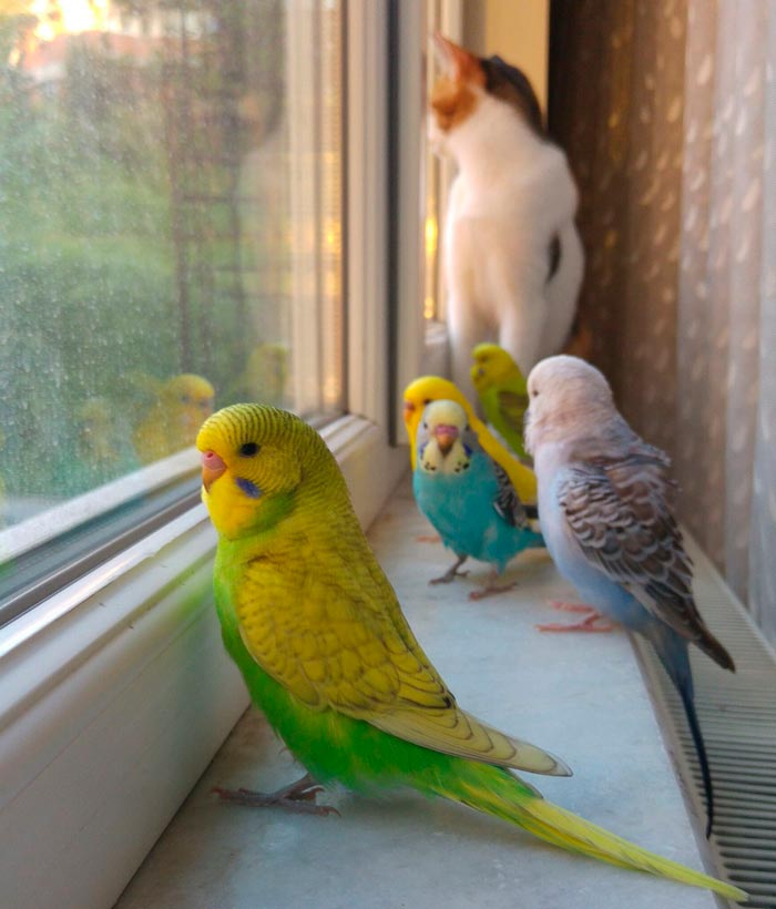 сколько ультрафиолета попугай получает через окно от солнца