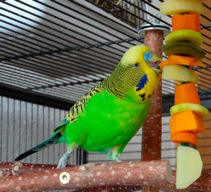 почему попугаи плохо едят без ультрафиолета