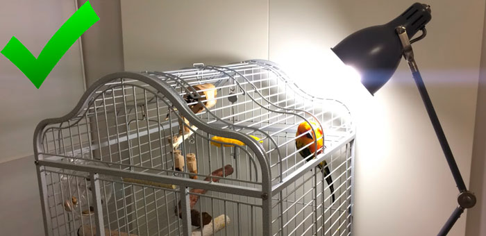 ошибки при подвеске уф лампы для попугаев