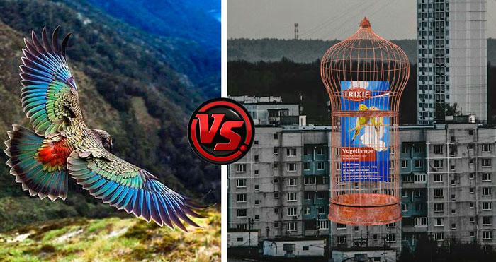 как выбрать ультрафиолетовую лампу для попугаев и птиц