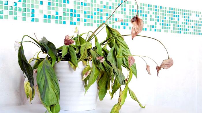 растения гибнут от бактерицидной лампы
